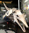 Basilosaurus skeleton 2