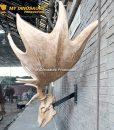 Megaloceros skull 4