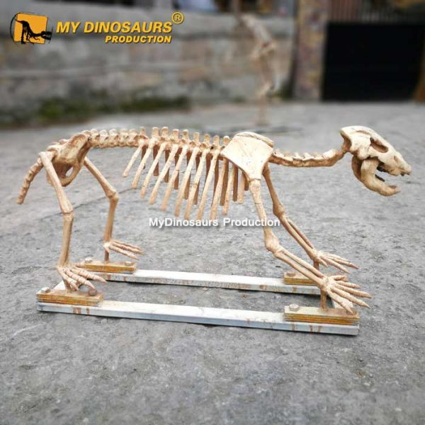 Cave bear skeleton 1