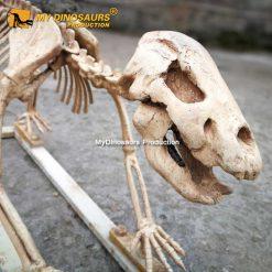 Cave bear skeleton 2