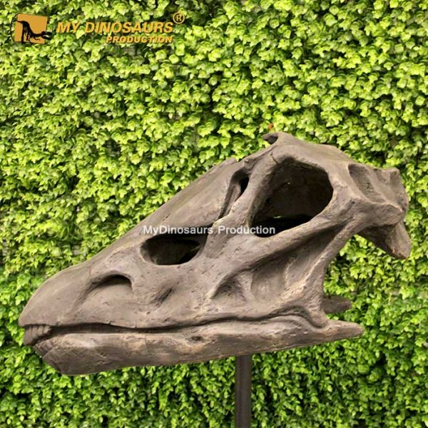 Diplodocus skull 1