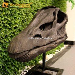Diplodocus skull