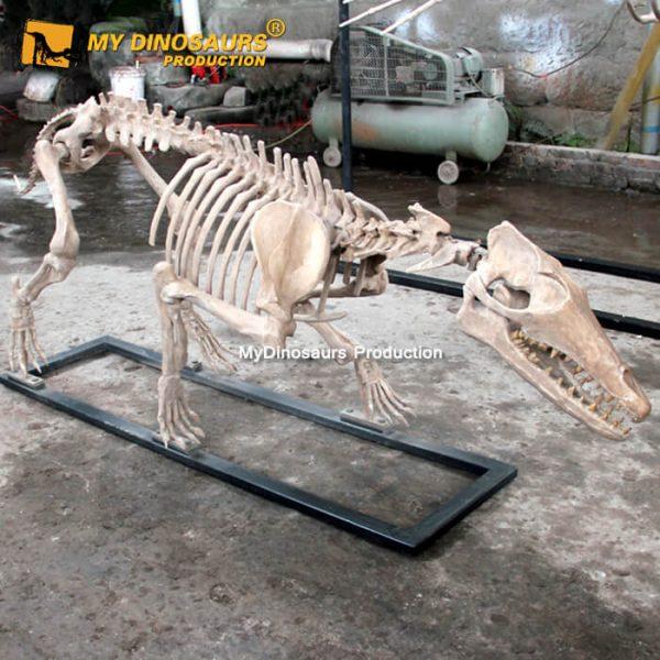 Pakicetus skeleton