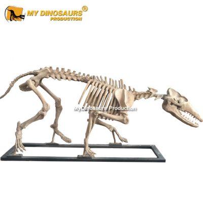 Pakicetus skeleton (2)