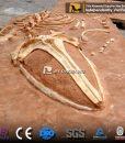 Whale skeleton dig site 1
