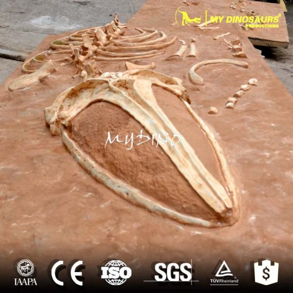 Whale skeleton dig site