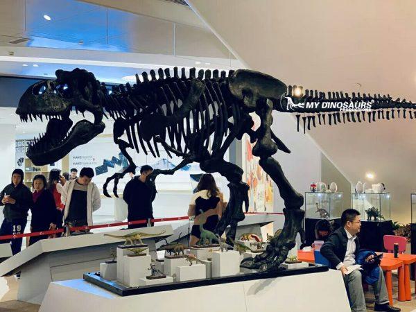 dinosaur fossil replica T rex