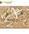 dinosaur fossil wall sculpture