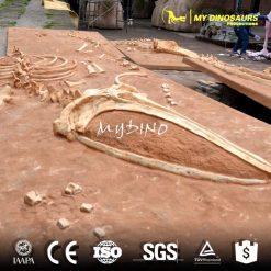 life size sea animal whale skeleton