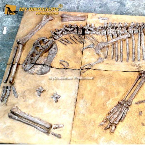 trex fossil cast