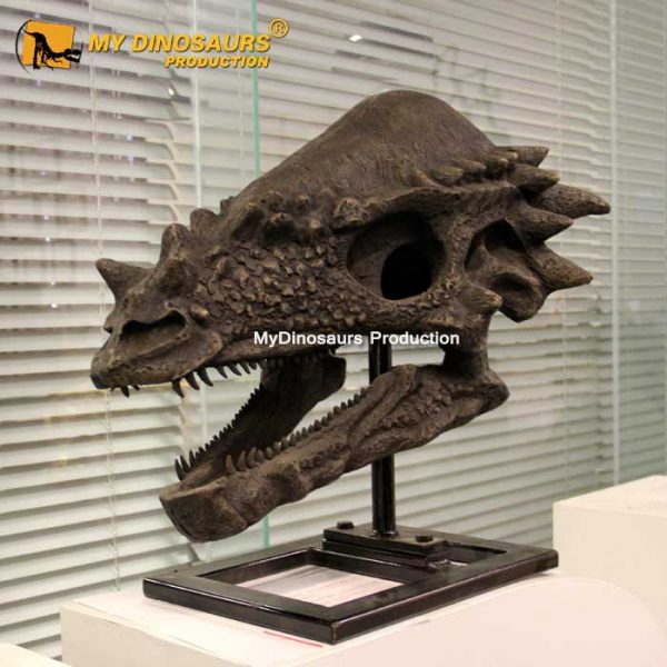 Pachycephalosaurus skull 1