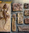Wall mounted dinosaur fossils 1]