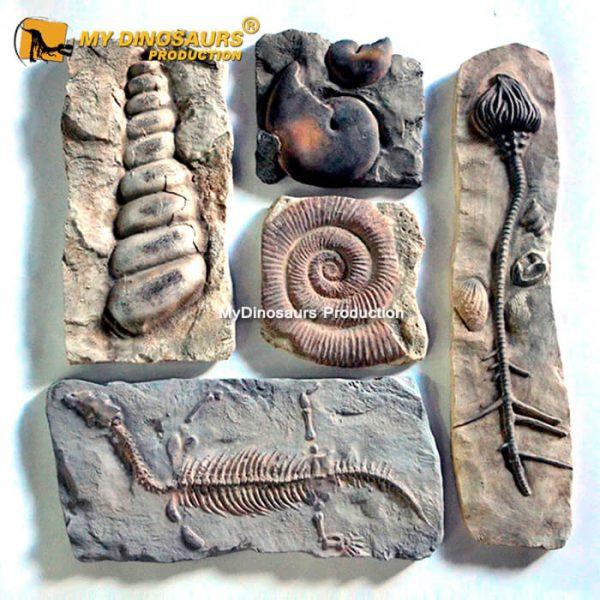 Wall mounted dinosaur fossils 2