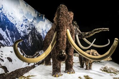 Jääkauden jättilaiset  näyttely 2016 Museokeskus Vapriikki.