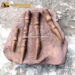 Dinosaur claw fossil cast 1