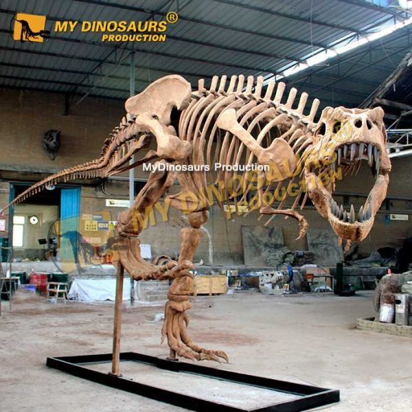 10m Trex skeleton 1