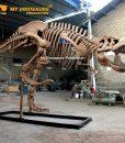 10m Trex skeleton