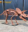 3M triceratops skeleton 1