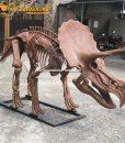 3M triceratops skeleton 2