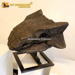 Ankylosaurus skull 1