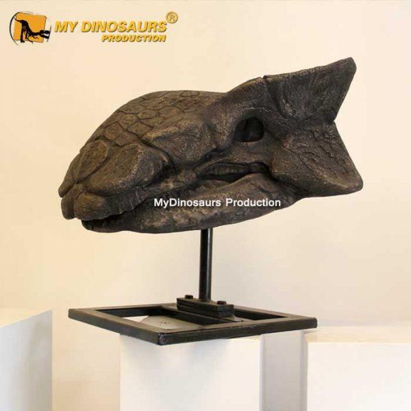 Ankylosaurus skull