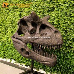 Carnotaurus sastrei skull