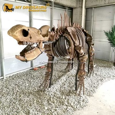 Chilotherium skeleton