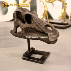 Maiasaura skull
