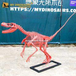 Red raptor skeleton 3