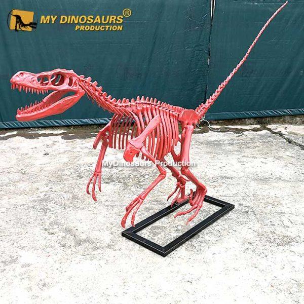 Red raptor skeleton