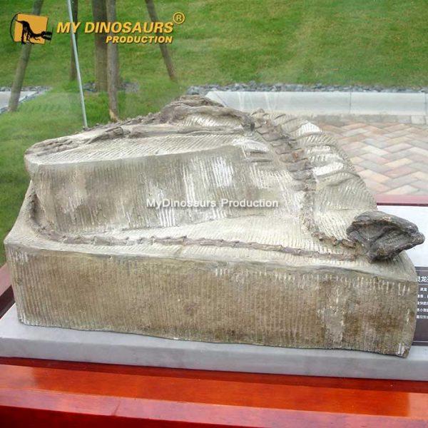 agilisaurus fossil cast