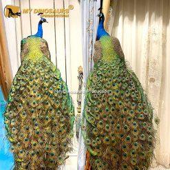 realistic peacock 2