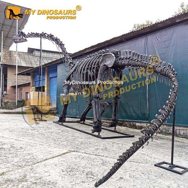 Camarasaurus skeleton 1