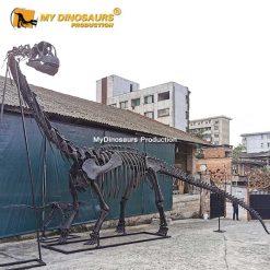 Camarasaurus skeleton 2