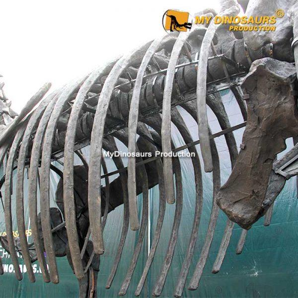 Camarasaurus skeleton 3