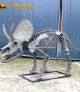 New triceratops skeleton 1