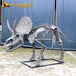 New triceratops skeleton 1