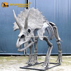 New triceratops skeleton 2