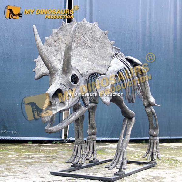 New triceratops skeleton 2