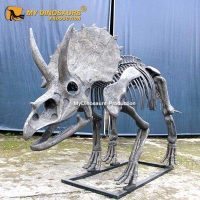 New triceratops skeleton