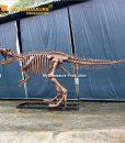 T rex skeleton 6.3m