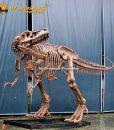 T rex skeleton 6.3m 2