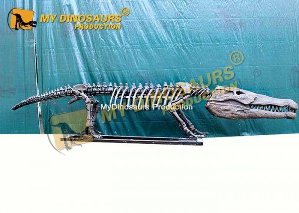 goniopholis skeleton 1