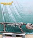 goniopholis skeleton 2