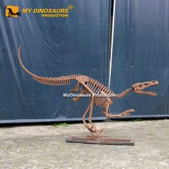 life size raptor skeleton