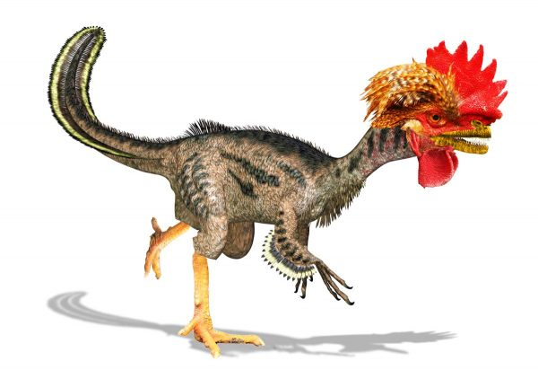 dino chicken related
