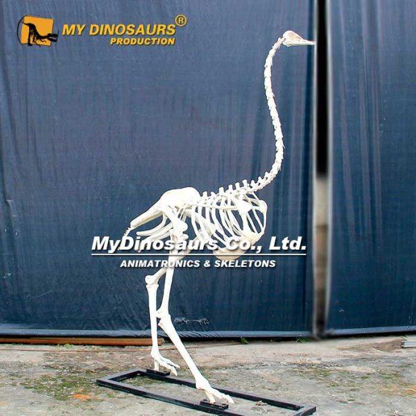 Ostrich skeleton