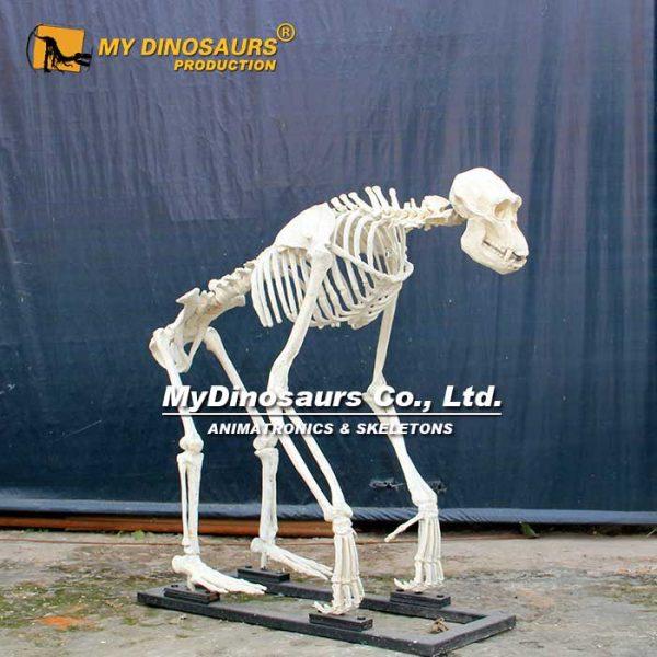 gorilla skeleton 1