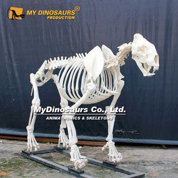 lion skeleton 1