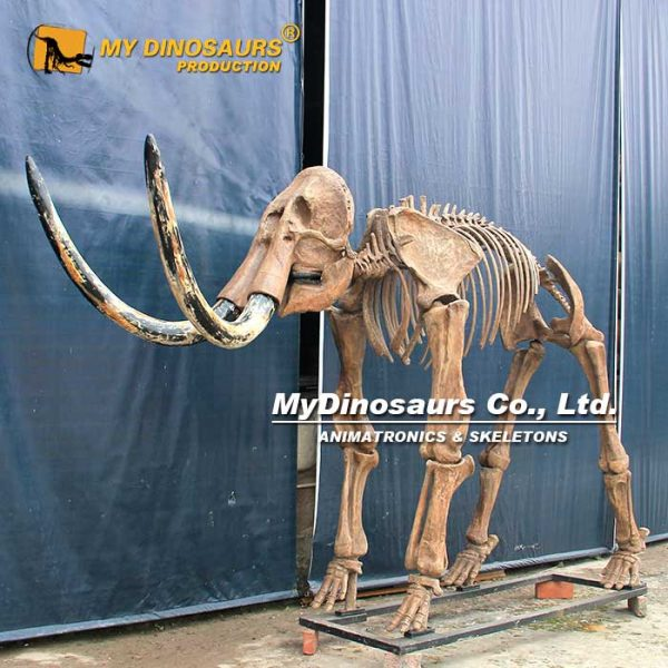 mammoth skeleton 4